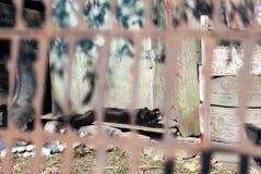 Rustikale schwarze Katze, die in der Sonne im Dorfyard sich aalt Lizenzfreie Stockbilder