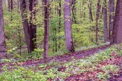 Rustikale Spur durch Holz eines grünes Frühlinges stockbilder