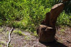 Rustikaler Baumstumpfsitz Stockbilder