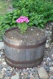 Rustikaler Blumen-Topf mit den rosa und weißen Blumen Lizenzfreie Stockfotos