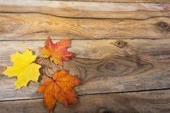 Rustikaler Gruß der glücklichen Danksagung mit Fallahornblättern stockfoto
