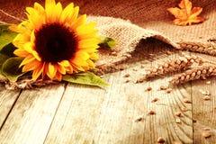 Rustikaler Hintergrund mit einer Sonnenblume und einem Weizen Lizenzfreie Stockbilder