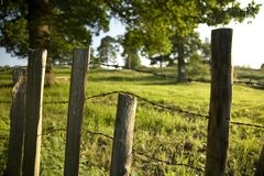 Rustikaler Landschaft-Zaun Stockbilder
