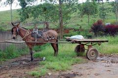 Rustikaler Pferden-Wagen Lizenzfreies Stockfoto