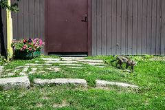 Rustikaler Zaun mit Katze Lizenzfreie Stockfotos