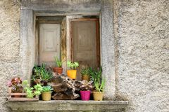 Rustikales Fenster mit Anlagen Lizenzfreie Stockfotografie