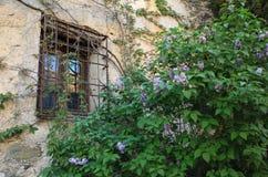 Rustikales Fenster mit Anlagen Lizenzfreie Stockfotos
