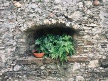 Rustikales Steinfenster und exotische Grünpflanzen, Entwurf im Freien stockfotografie