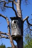 Rustikales Vogel-Haus auf Baum Lizenzfreie Stockfotos