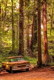 Rusting away in the Redwoods forest stock photo
