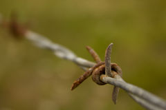 Rusting barbed wire Stock Images