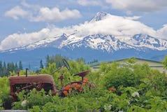 Rusting Tractor, Flowers, Mount Hood Stock Photo