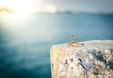Rusty anchor hook on the rock Royalty Free Stock Photos