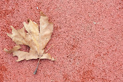 Rusty autumn leaf on red background copy space Royalty Free Stock Photos