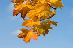 Rusty autumn leaves Stock Image