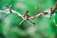 Rusty barb wire Royalty Free Stock Images