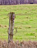 Rusty Barb Wire på en trästolpe royaltyfri fotografi
