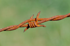 Rusty barbed. Close on a nod rusty barbed stock images