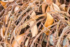 Rusty barbed with leaves Stock Photography