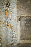 Rusty barbed wire and broken plaster Stock Image