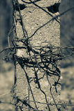 Rusty barbed wire. Cold tone. Stock Images