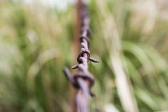 Rusty Barbed Wire Fence Royalty Free Stock Photo