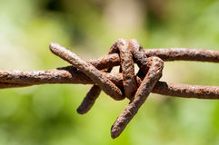 Rusty barbed wire on green background closeup Stock Image