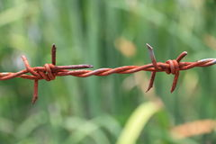 Rusty barbed wire on green field. Rusty barbed wire on background of green field Royalty Free Stock Photos