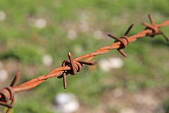 Rusty barbed wire Royalty Free Stock Photo