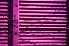 Rusty barbed wire on Pink wall  background Stock Images