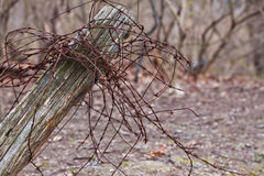 Rusty Barbed wire on rustic fence post Stock Image