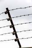 Rusty barbed wire Royalty Free Stock Image