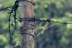 Rusty barbed wire on tube Royalty Free Stock Image