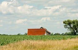 Rusty Barn Across Corn Field Stock Photos