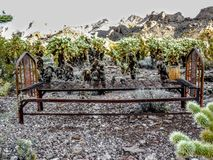 Rusty Bed frame surrounded by jumping cactus and Arizona mountain range in background Royalty Free Stock Photo