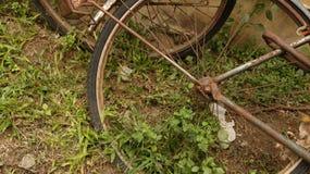 Rusty Bicycle Wheel en jardín del vintage imágenes de archivo libres de regalías