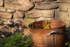 Rusty Bin With Weeds Close upp arkivbild