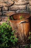 Rusty Bin With Weeds. A rusty bin with weeds growing in it in front of a stone wall Royalty Free Stock Photography