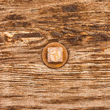 Rusty bolt head on wood. Rusty old bolt head sticks out of grainy wooden surface of weathered timber Royalty Free Stock Image