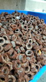 Rusty bolts Stock Image