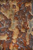 Rusty Brown Tree Bark imagem de stock royalty free
