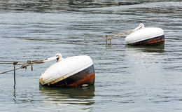 Rusty buoys in port water Royalty Free Stock Photography