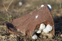 Rusty can. The house-fortress for snails Stock Image
