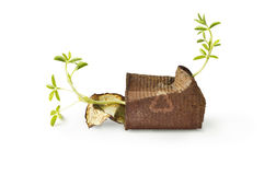 Rusty can with growing plant on the white background, environment concept Royalty Free Stock Images
