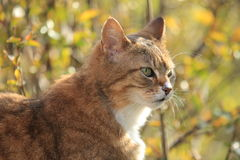 Rusty cat Stock Photo