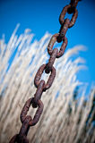 Rusty Chain. In front of a Corn Field Royalty Free Stock Image