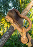 Rusty chain links on large anchor in garden Stock Images