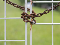 Rusty chain locks a white gate Stock Photography