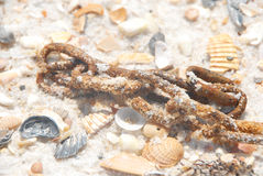 Rusty chain on seashore Royalty Free Stock Image