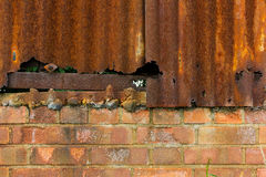 Rusty corrugated iron and brick wall background Royalty Free Stock Image